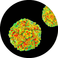 Causes of Tonsilitis - Enteroviruses