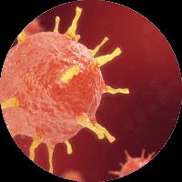 Causes of Tonsilitis - Parainfluenza viruses