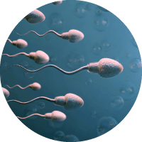 Causes of Male Infertitlity - Abnormal Sperm Production